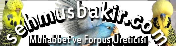 ŞehmusBakır.com